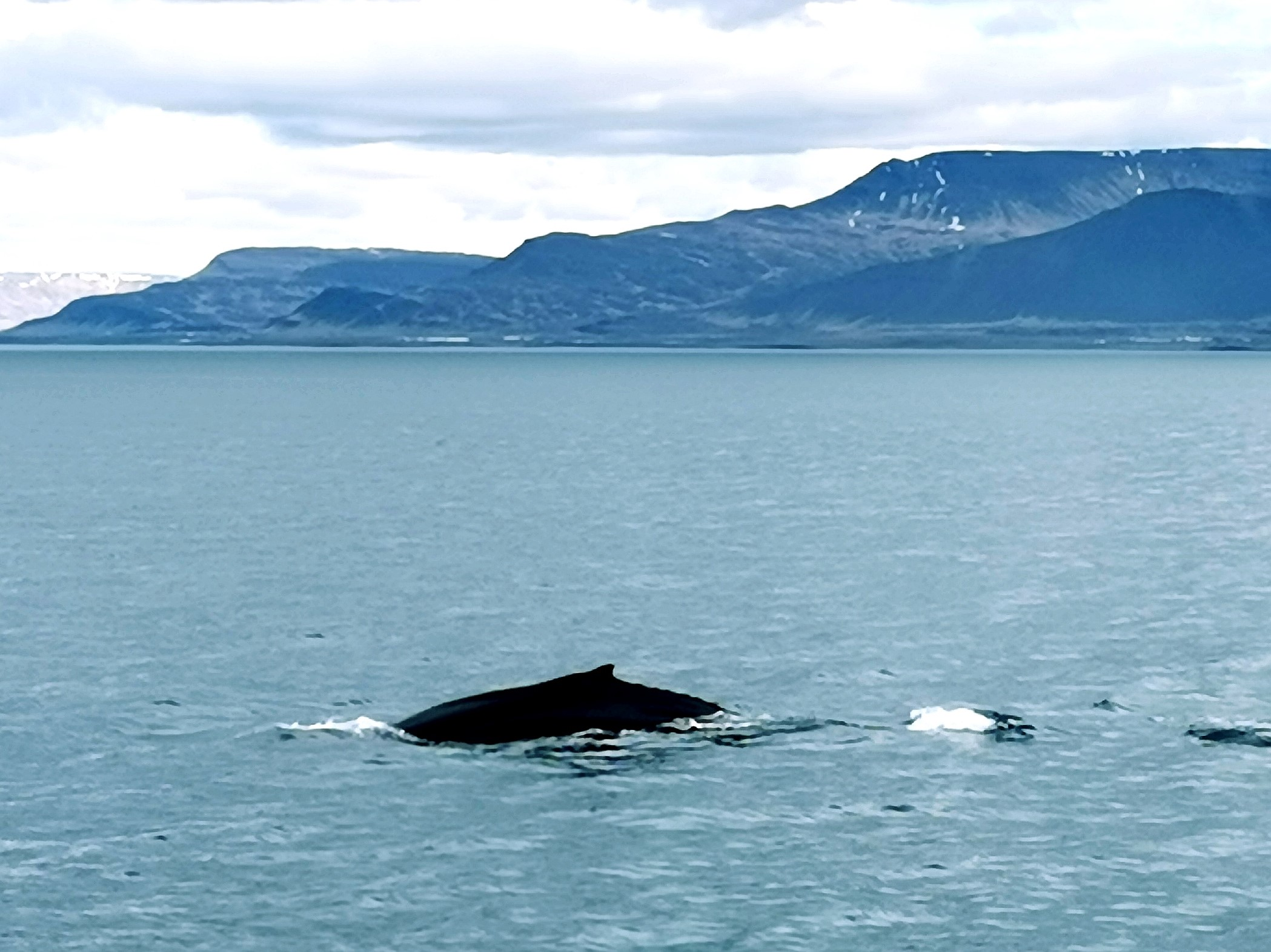 Whale Watching in Faxaflói
